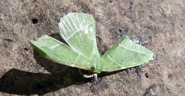 18-emerald