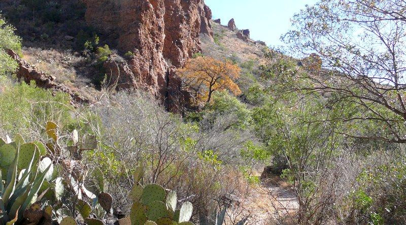 8-trail-view