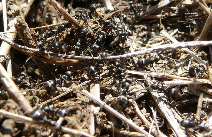 ant-mound-1-in-wetland-closeup