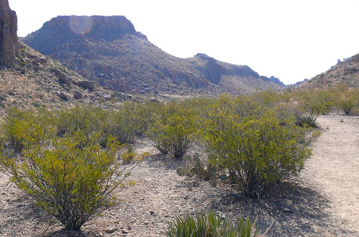 grapevine-trail