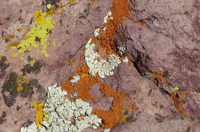 lichens-on-rocks-2