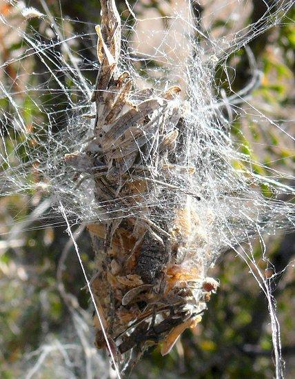 odd-spiders-web-closeup