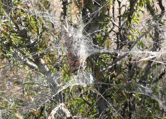 odd-spiders-web