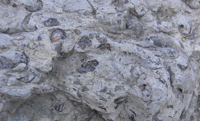 santa-elena-canyon-4-fossils