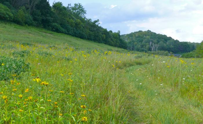 Pat's Prairie 2009