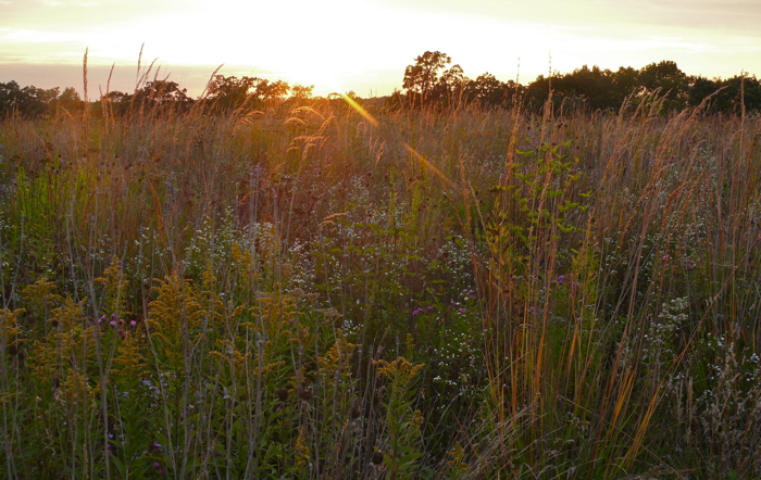 Western Prairie