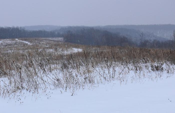 Buffalo Ridge Prairie