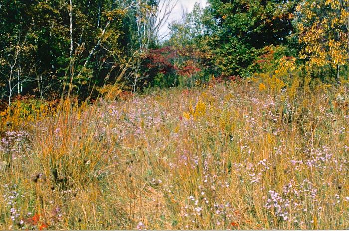 meadow 2000-2001