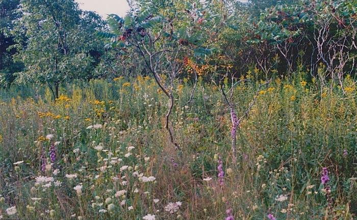 summer 2000 1