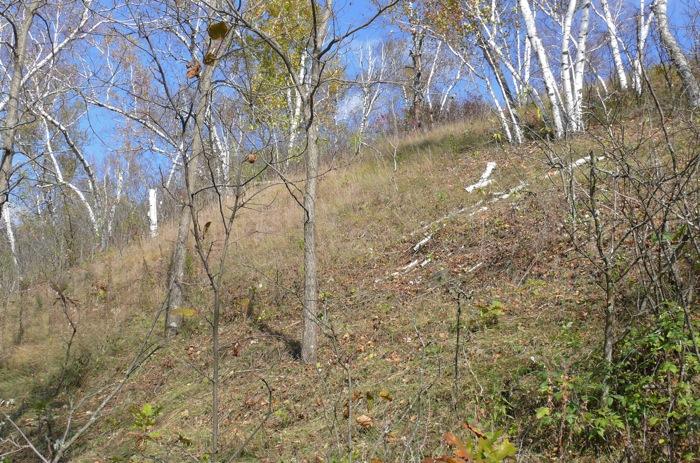 10-18-08 southwest hillside