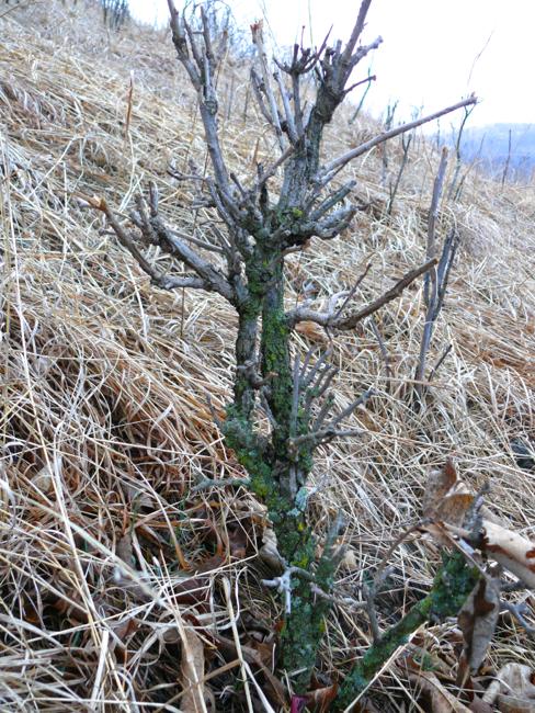 3-31-09 old oak