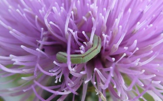 8-26-11 caterpillar 1