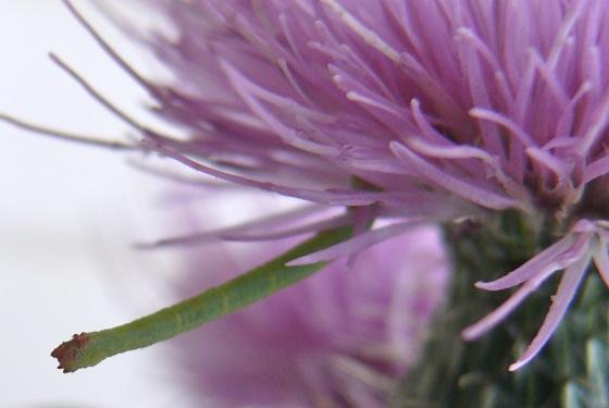 8-27-11 caterpillar 1