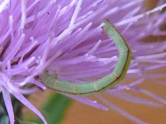 8-27-11 caterpillar 2