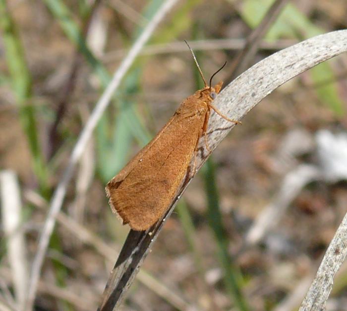 9-18-08 Virbia sp.