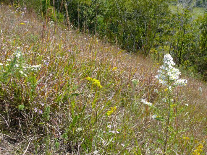 9-18-08 lower prairie flowers
