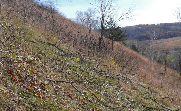 10-21-10 cutting hillside copy