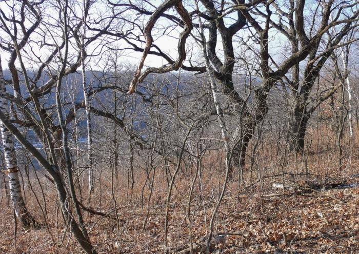 12-29-11 1 oaks