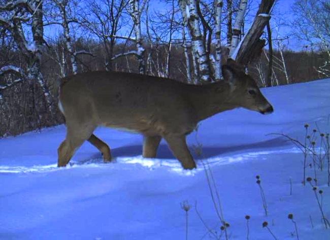 deer 3-6-13