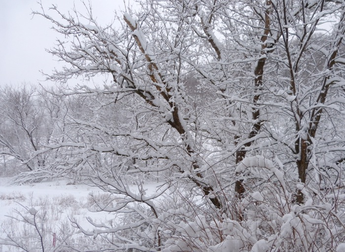 snow 3-11-13