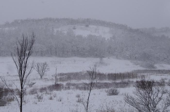snow on sumac prairie