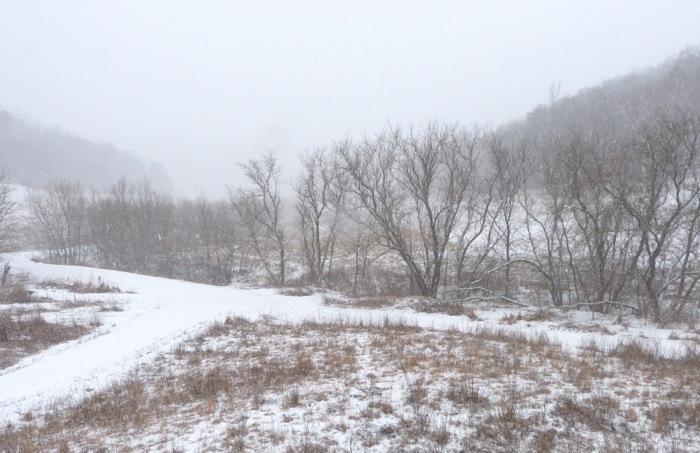 spring snow 4-14-13