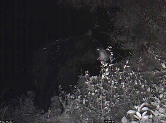 9-24-13 1 bear 1