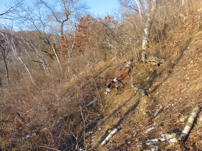 11-15-12 lower west slope before cutting