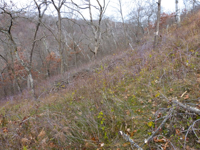 11-5-12 west slope brush pile