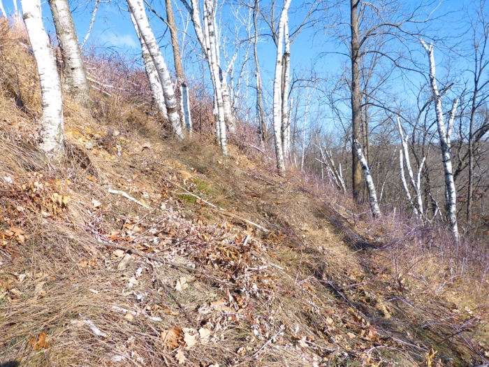 12-8-12 east slope after cutting
