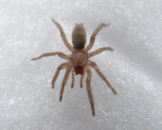 1-12-14 spider