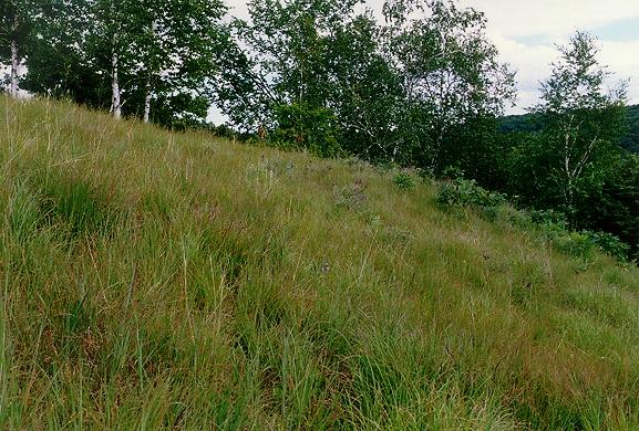 the prairie summer 2000