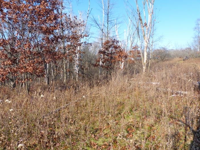 10-28-12 1 aspen grove