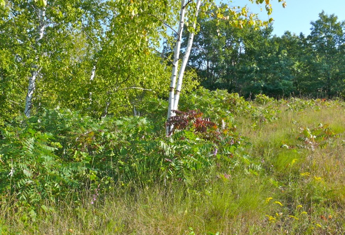 9-7-08 west slope before clearing sm