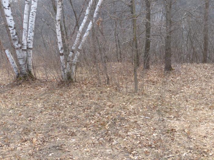 American Woodcock nest location 4-19-14 1