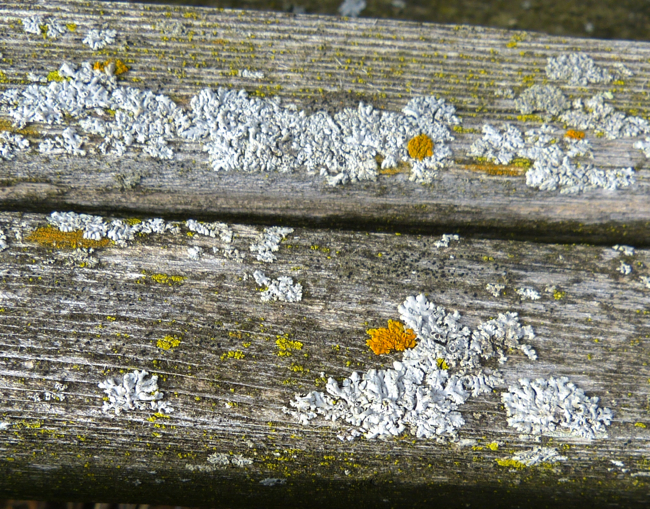 lichens on bench