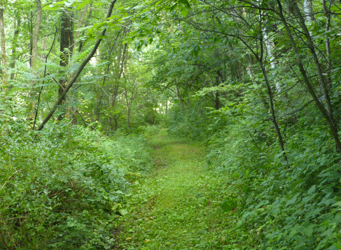 cabin road