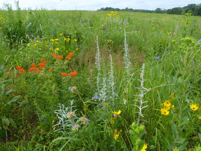 western prairie flowers 1