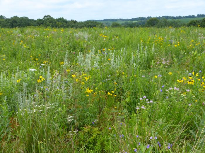 western prairie flowers 3