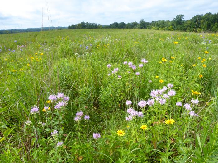 western prairie flowers 4